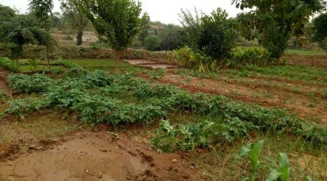Backyard Kitchen Garden developed near to family Khat's house comprising 20 different vegetables such as tomato, eggplant, spinach, radish, air potato and others